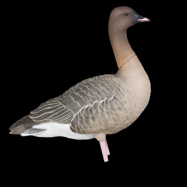 Billede af Avian-X Kortnæbbede Gæs