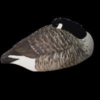 Billede af Avian-X Hvilende Canadagæs skaller