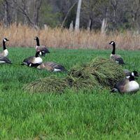 Billede af Græs camouflage til Power Hunter