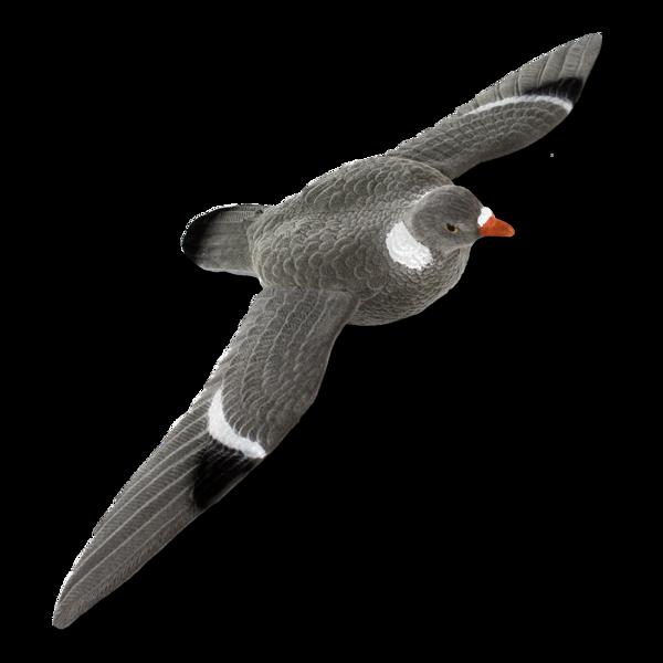 Billede af Flyvende lokkedue med vinger