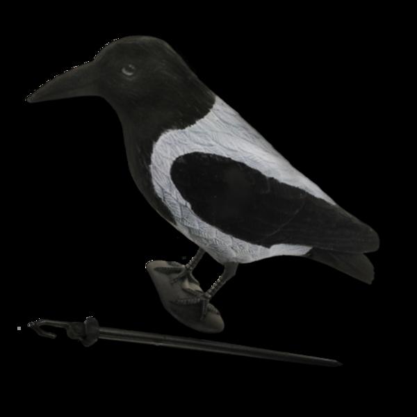 Billede af lokkekrage med flock